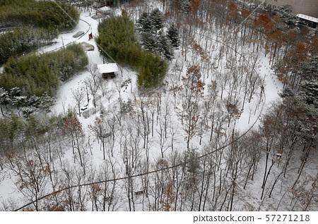 눈 내린 떡갈나무 숲속 57271218