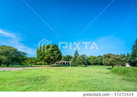 도쿄 여름 히카리가 오카 공원 57272424