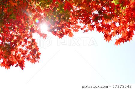 불타오르는 10월의 단풍 57275348