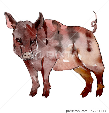 Boar farm animal isolated. Watercolor background illustration set. Isolated pig illustration element 57281544