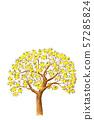레몬 나무 수채화 이미지 57285824