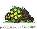 레몬 나무 사과 나무 57285828