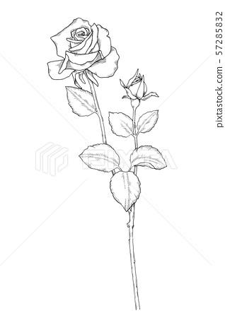 Rose Line Drawing Stock Illustration 57285832 Pixta Rose line drawing template #flower | flower line drawings. https www pixtastock com illustration 57285832