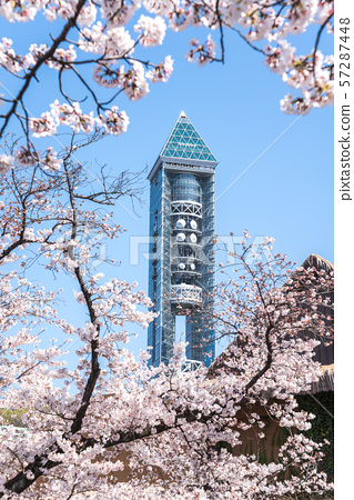 Higashiyama Sky Tower over cherry blossoms in full bloom 57287448