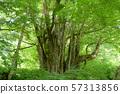 사카의 큰 가발 야마가타 현 57313856