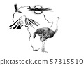 Ostrich on Africa map background with Kilimanjaro 57315510