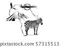 Zebra on Africa map background with Kilimanjaro 57315513