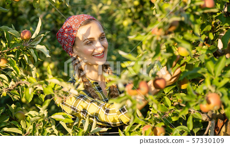 Fruit farmer woman inspecting her apple orchard 57330109