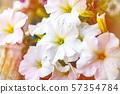 petunia flowers red, pink purple, white flowers in 57354784