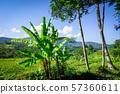 Plantations in green fields, Sidemen, Bali, 57360611