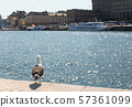 Seagull sitting on a pier, on the background of the beautiful city of sea, Stockholm. 57361099