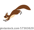 squirrel on white background 57363620
