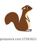 squirrel on white background 57363621