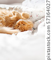 Cute ginger cat lying in bed. Fluffy pet in cozy home. 57364027