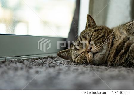 animal beautiful baby cat sleep comfort pet relax 57440313