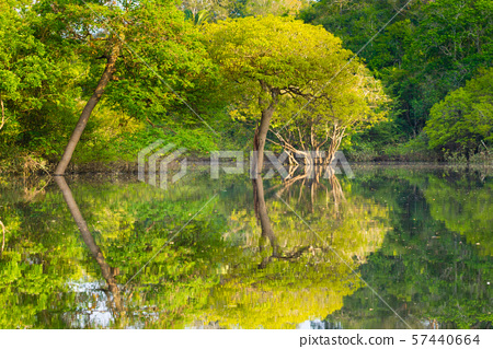Panorama from Amazon rainforest, Brazilian wetland 57440664
