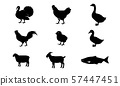 动物 鸟儿 鸟 57447451