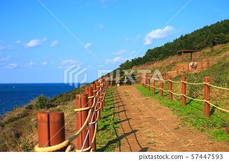 서우봉해변,해안,바다,말,백사장,해수욕장, 57447593