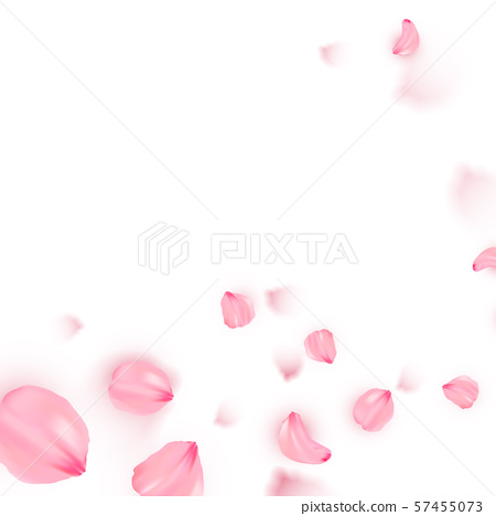 Pink sakura falling petals vector background 57455073