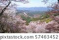 요시노 산에 천 그루 57463452