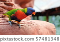 Portrait of a small colorful parrot sitting on a 57481348