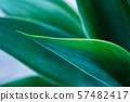 抽象植物背景 57482417