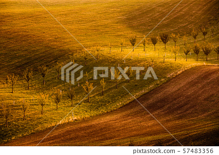 Wavy brown landscape in Moravian Tuscany 57483356
