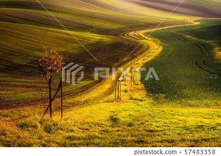 Tree and path between fields in Moravian Tuscany 57483358