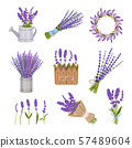Set of lavender compositions. Vector illustration on a white background. 57489604