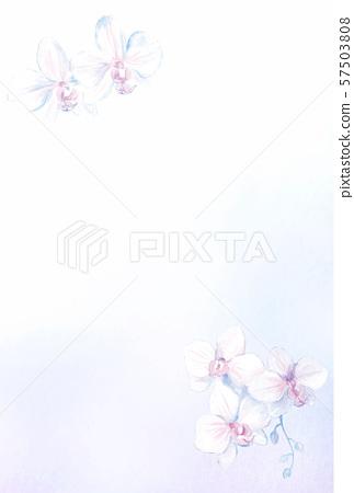 Postcard template Phalaenopsis orchid 57503808