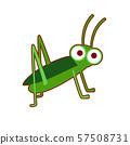 Vector illustration of green grasshopper 57508731