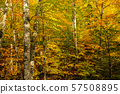 Beautiful autumn landscape 57508895