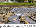 강 배경 소재 자연수 57511978