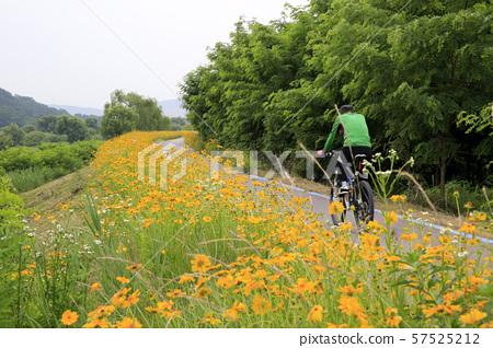 자전거 산책 57525212