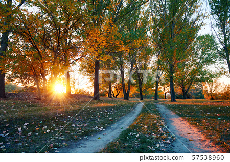 ground road and beautiful trees in the autumn 57538960