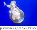 Swimming Jellyfish On Blue Background 57539127