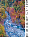 Aerial Autumn Forest River Japan 57548369