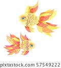 Goldfish on a white background. 57549222