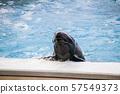 沖繩海洋博公園海豚秀(海豚劇場) 57549373