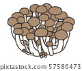 Shimeji / mushroom 57586473