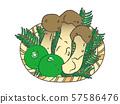 Matsutake / pine mushroom 57586476