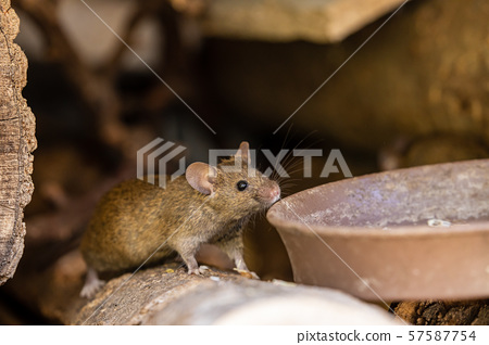 A adorable and cute little Mouse 57587754
