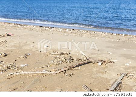 [자연 재해] 태풍 후 해변에 밀려 온 유목 유목 포착 57591933