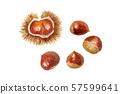 秋天成份栗子的水彩例证 57599641