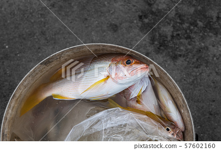 Sea fish catching from the ocean. 57602160