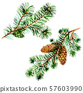 Branches of spruse and pine. Watercolor background illustration set. Isolated spruce illustration 57603990