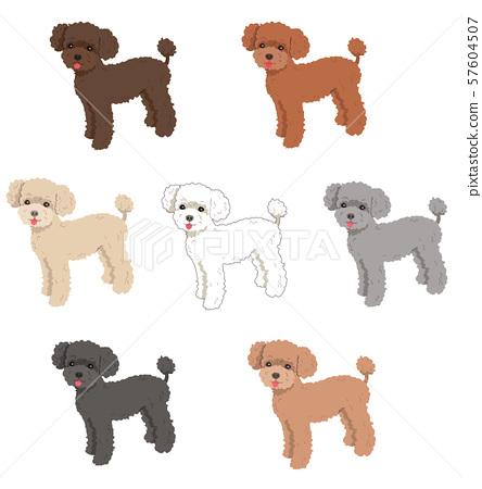 Poodle color variations 57604507