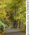 秋叶倾斜垂直构成 57608097