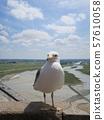 몽생 미셸에서 본 갈매기와 쿠에논 강변의 장엄한 풍경 57610058