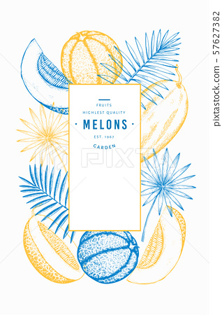 Melons and watermelons with tropical leaves design 57627382